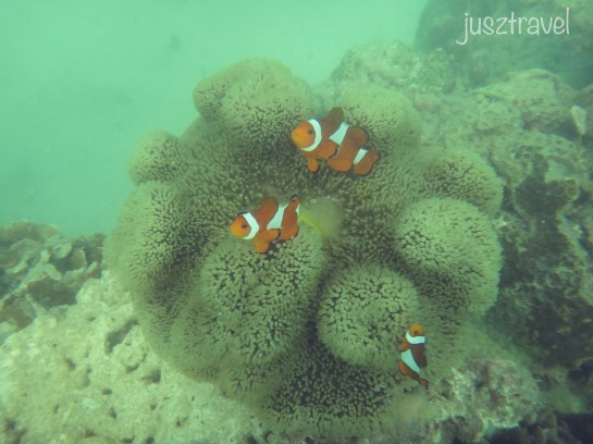 Oh hey, look! I found Nemo!